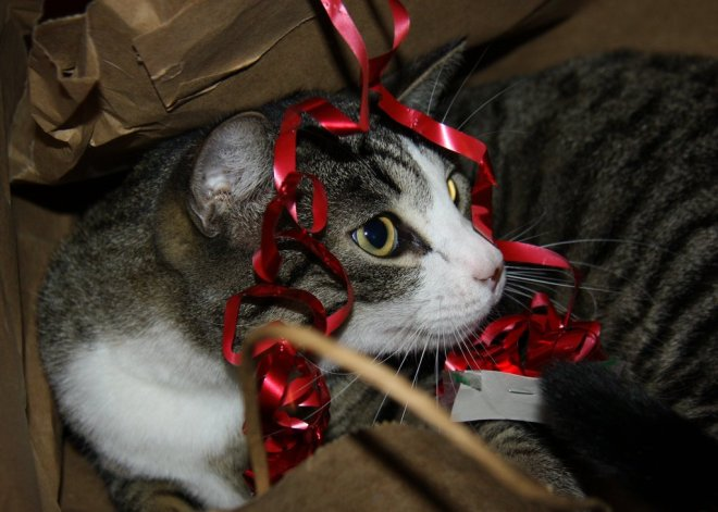 Look, I Wrapped Myself Up as a Present for You. Best. Gift. Ever. Right?
