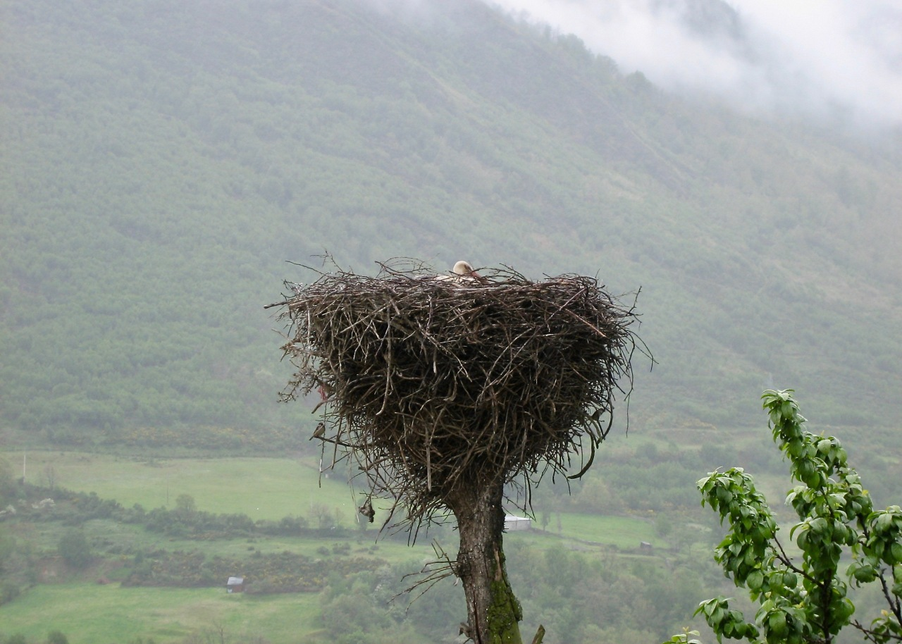 There were  a lot of stork nests here in Villablino