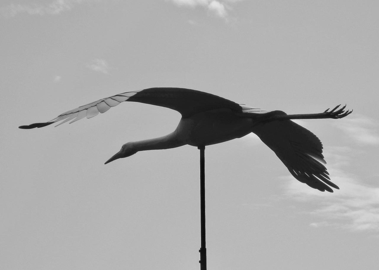 Whooping Crane Sculpture ICF WI 08-2009