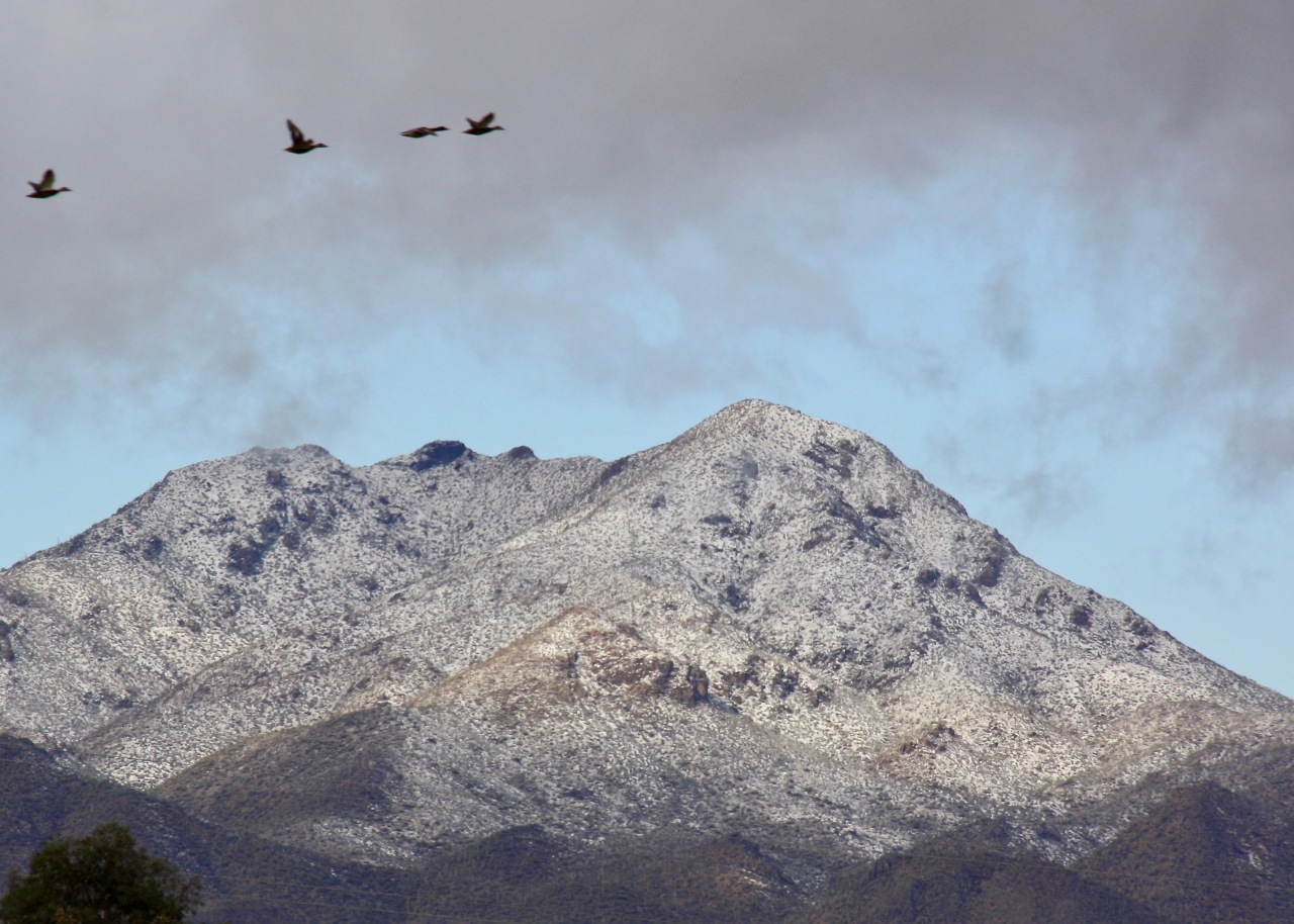 Snow on the Tucson Mountains