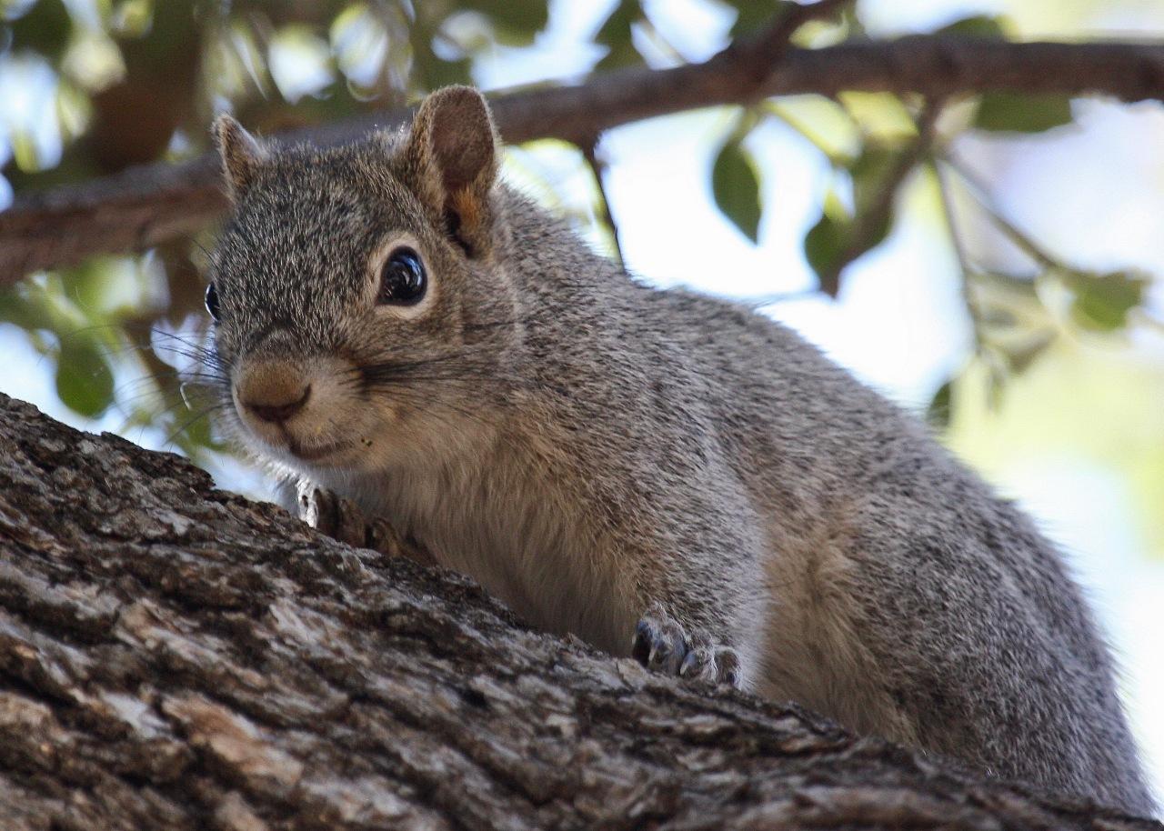 Squirrel Madera Canyon AZ 04-2010