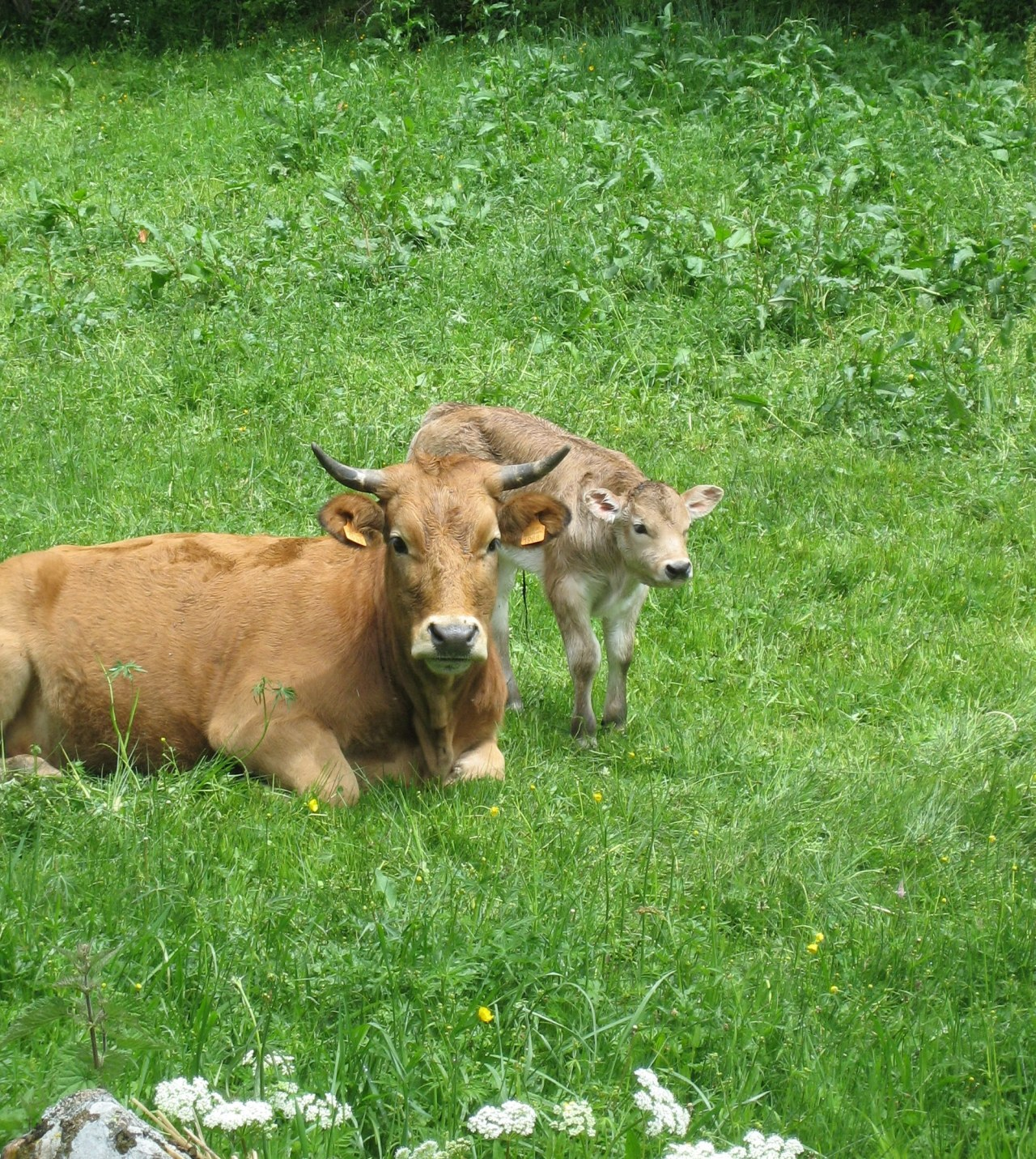 Mother and baby, seen on our hike into a valley east of Villablino