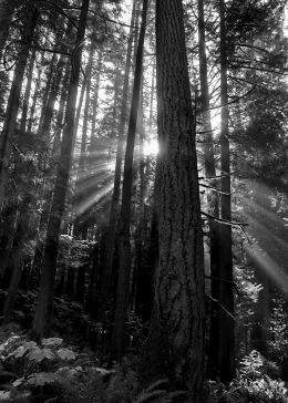 Sunbeams in the Fog 2