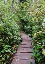 Ozette Loop Trail Boardwalk