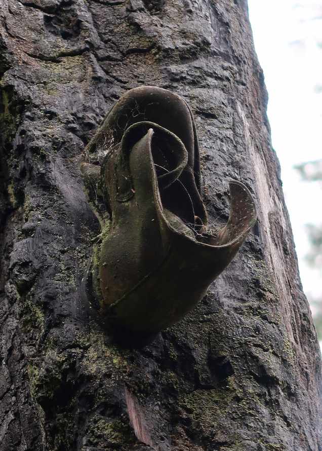 Old Boot Nailed to Tree, Ozette Loop Trail