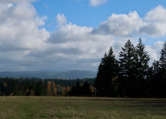 My View of Mt. Rainier