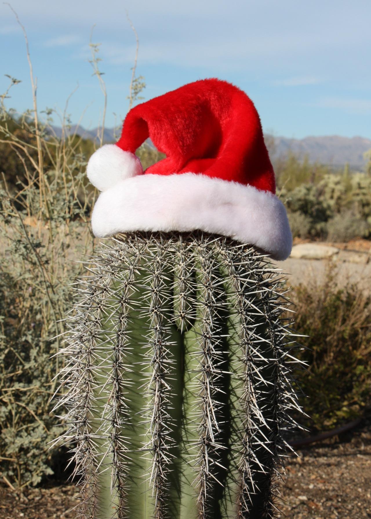 Santa Saguaro RS Tucson AZ 12-2012