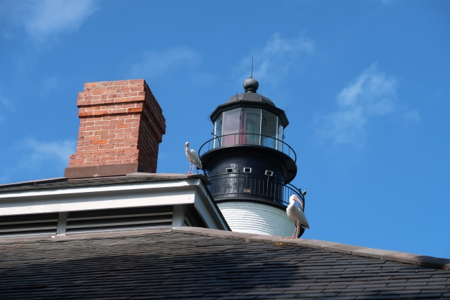 White Ibis on Lightkeeper's House