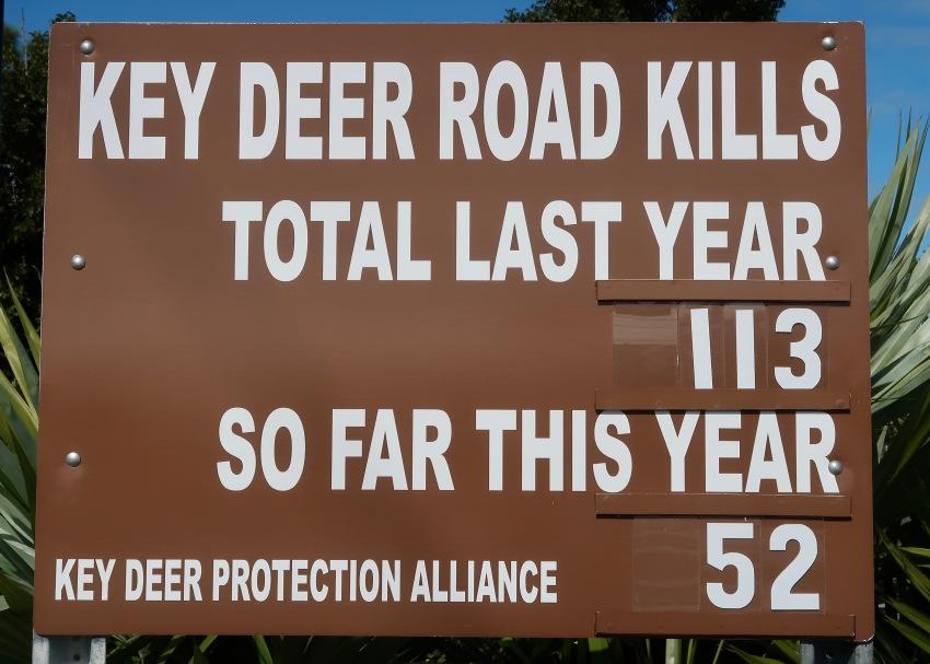 Key Deer Road Sign