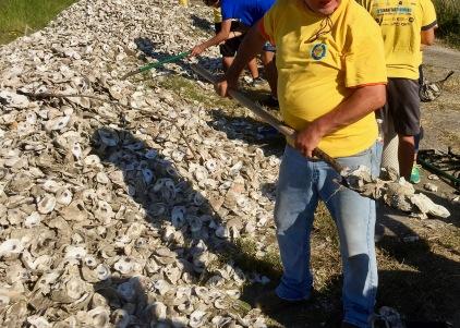 Shoveling Oyster Shells