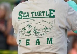 Sea Turtle Volunteers
