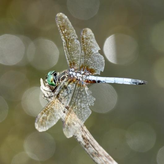 Worn Female
