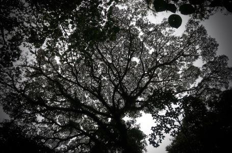 Canopy at Dusk