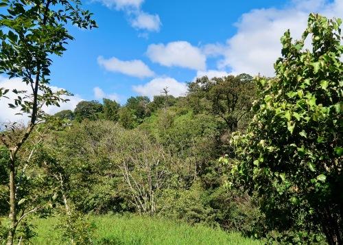 Lush Hillside