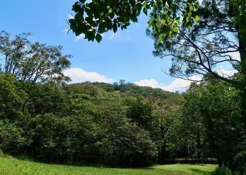 Another Hillside